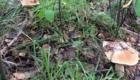 грибы 2