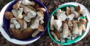 грибы 5