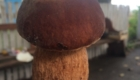грибы 6