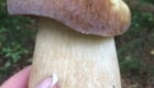 грибы 8