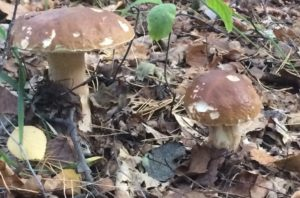 грибы 9